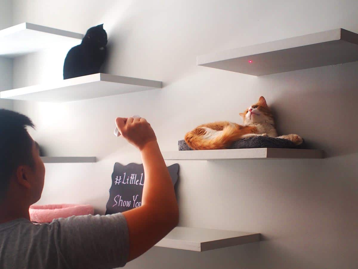 Little Lions Cat Cafe Nyc